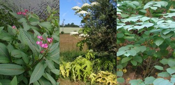 Gestion des plantes invasives